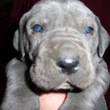 Schulenberg blue girl @ 3 weeks