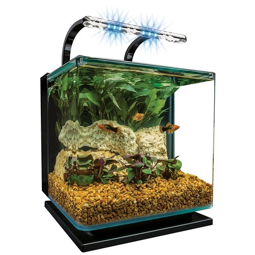 fish-tank-(4)