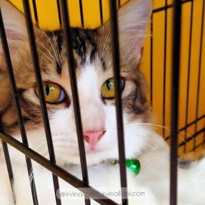Kucing Sebaiknya Dikandangin Atau Dilepas Aje, Sih ?
