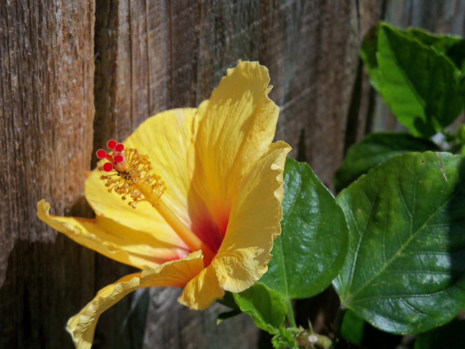 Gardening 2013 - 115_5683.JPG