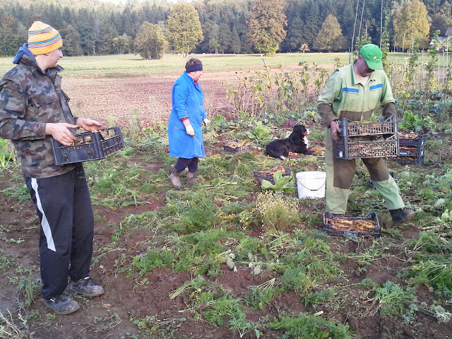 Kmetijstvo-agriculture - 20131003_172044.jpg
