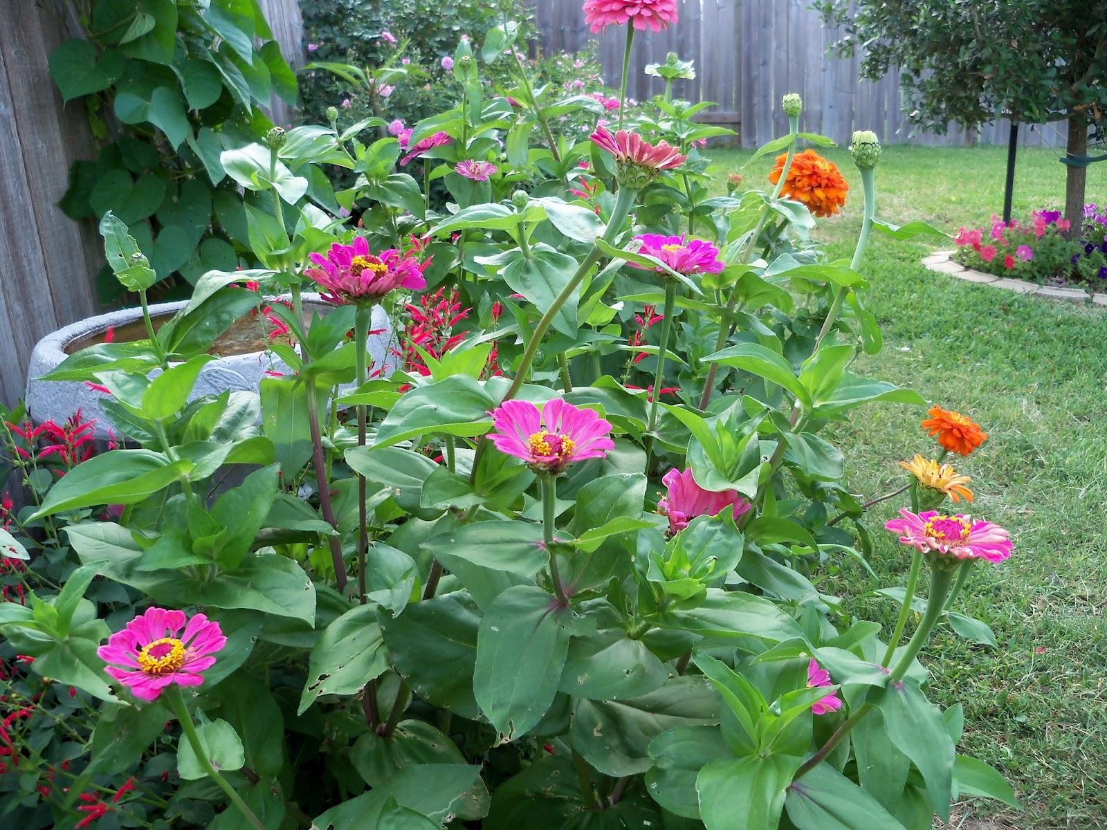 Gardening 2011 - 100_8208.JPG