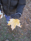 A child discovers frost on fallen leaves.