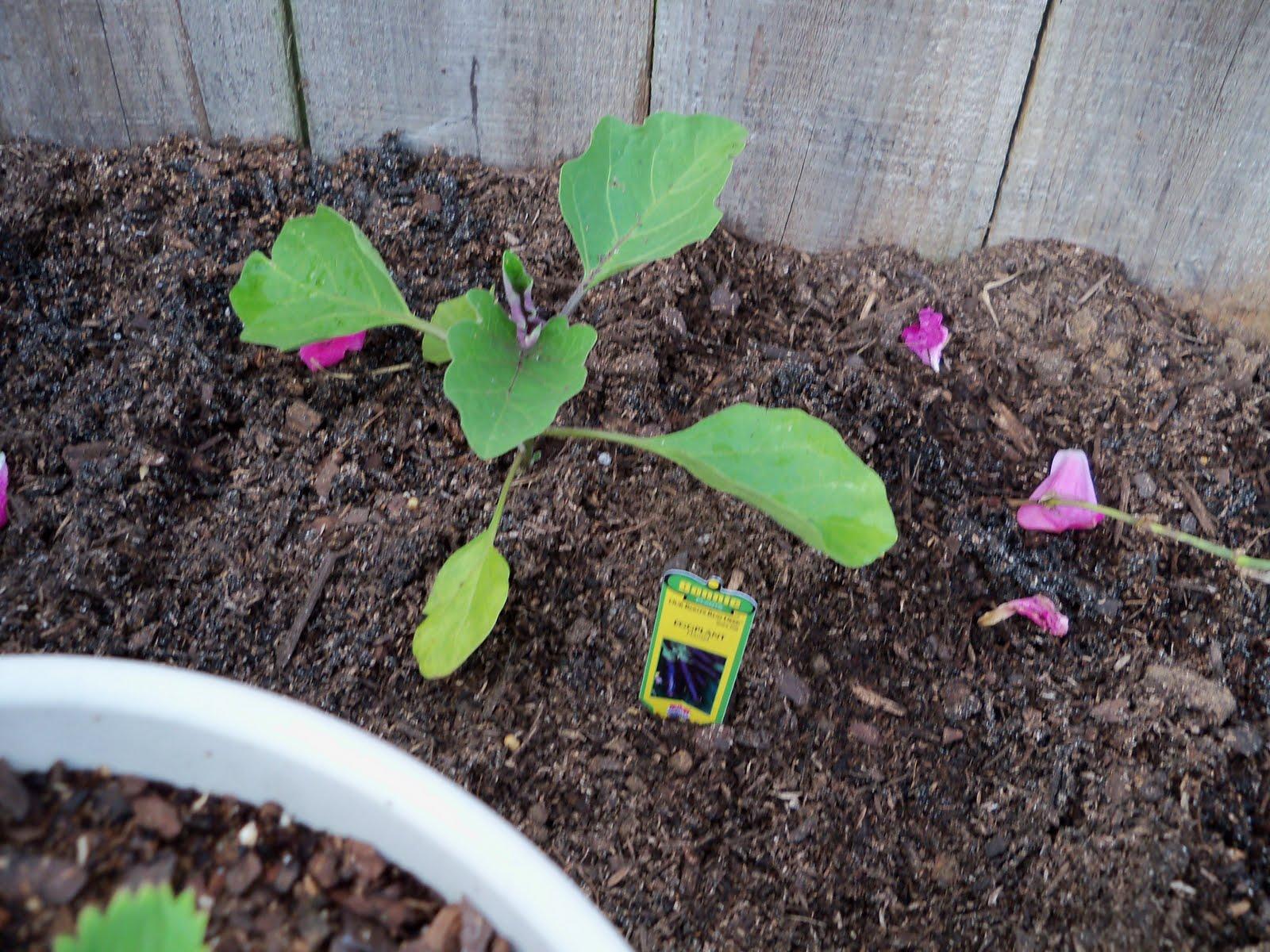 Gardening 2010 - 101_0935.JPG