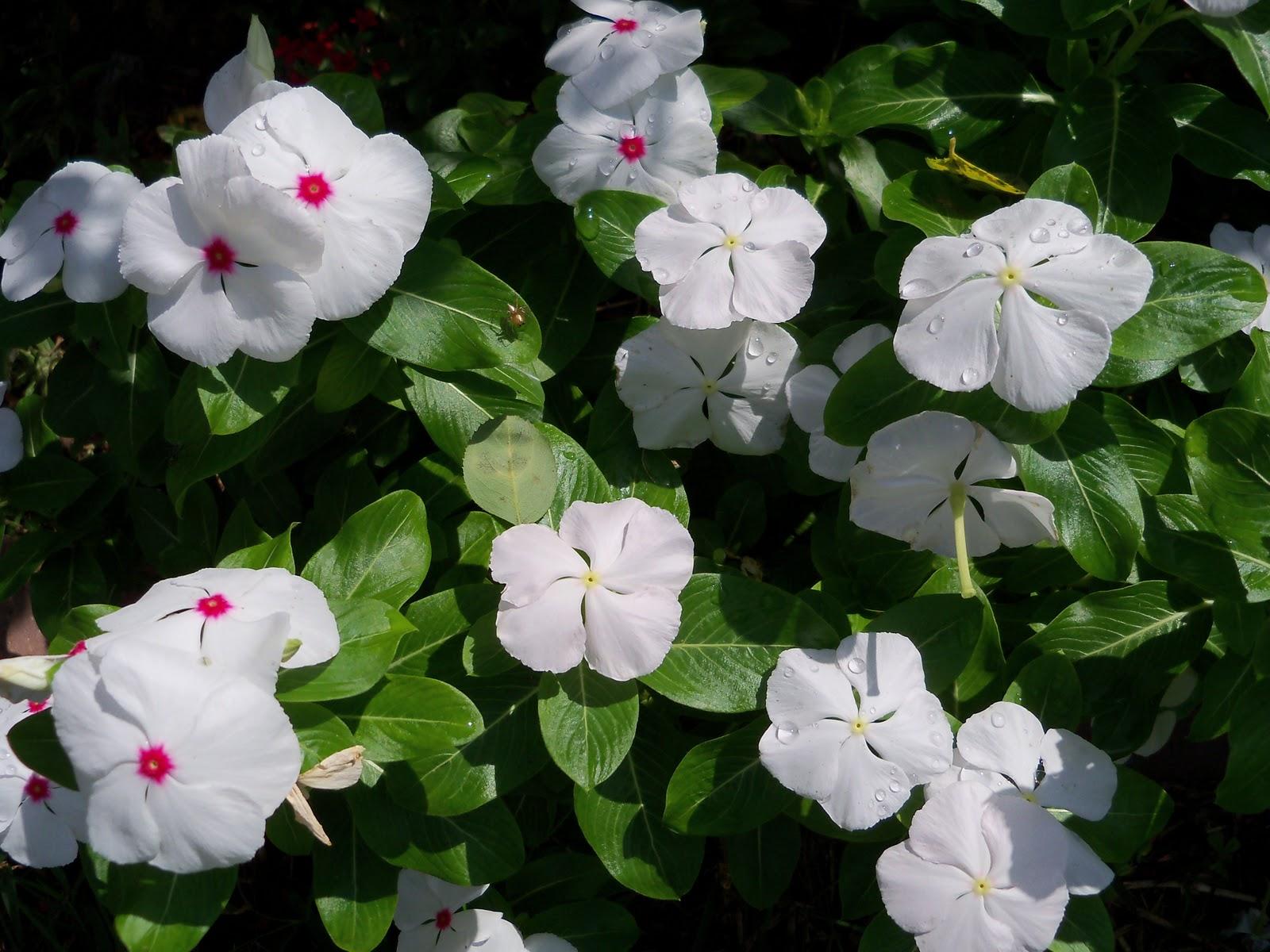 Gardening 2010, Part Three - 101_5126.JPG