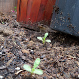 Gardening 2010 - 101_1045.JPG