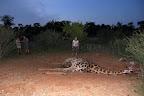 I nærheden af lodgen har nogen fundet denne døde giraf. Den vender vi tilbage til ...