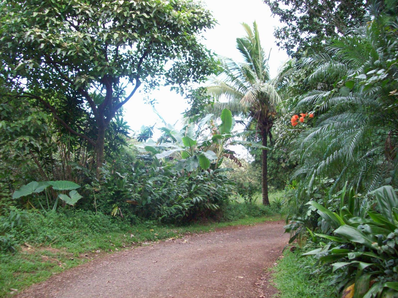 Hawaii Day 5 - 114_1385.JPG