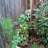 Gardening 2010, Part Two - 101_3194.JPG