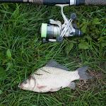 20160723_Fishing_Grushvytsia_006.jpg