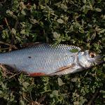 20150827_Fishing_Basiv_Kut_029.jpg
