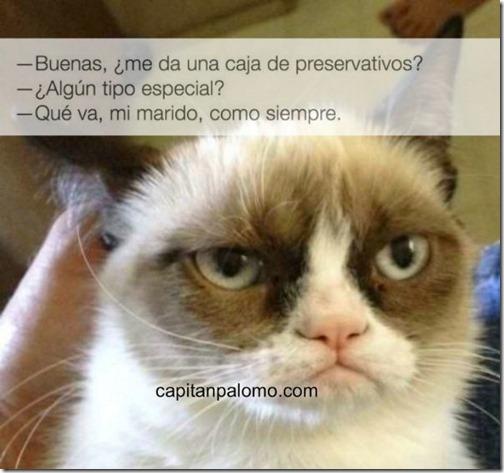 meme del gato gruñon (12)