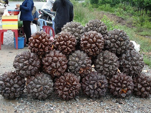 Nipa Fruit