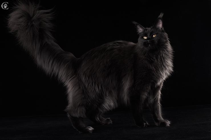 мэйкун фото чёрный
