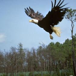Eagle Bar NYC's profile photo