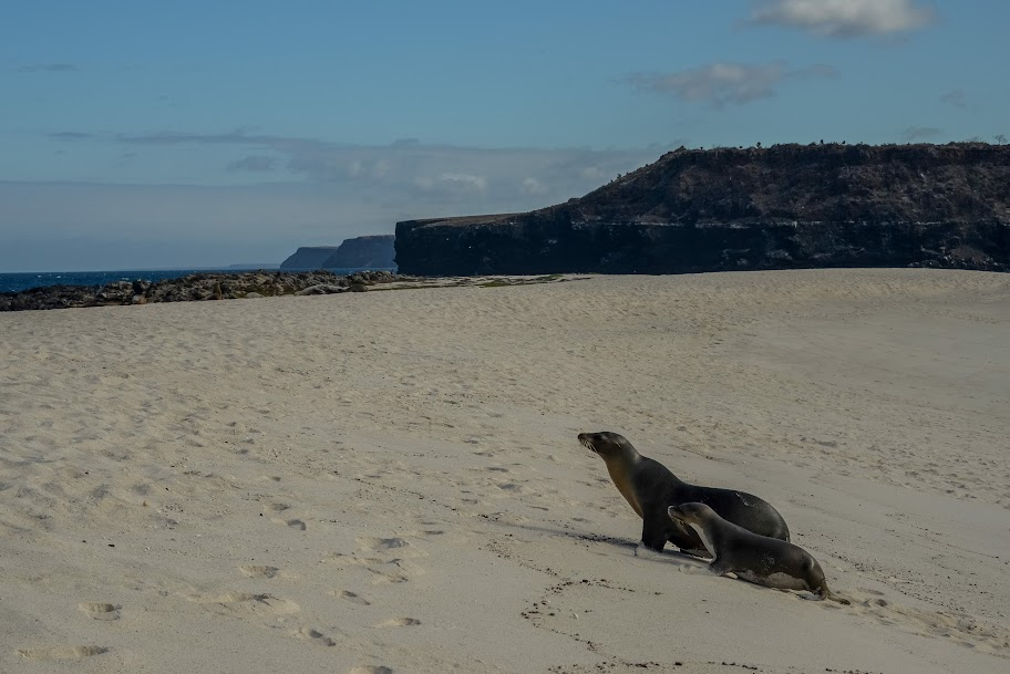 galapagos - Galapagos_FB-53.jpg