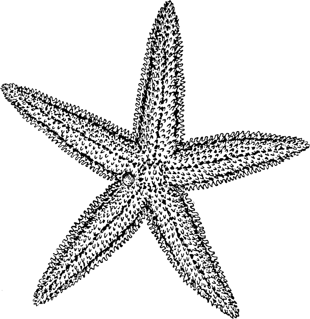 Starfish Coloring Pages Cheap With Picture Of Starfish Coloring Interior