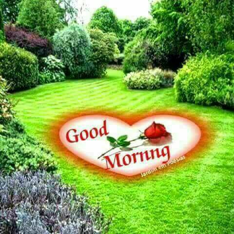Good Morning Have A Nice Day Facebook DP