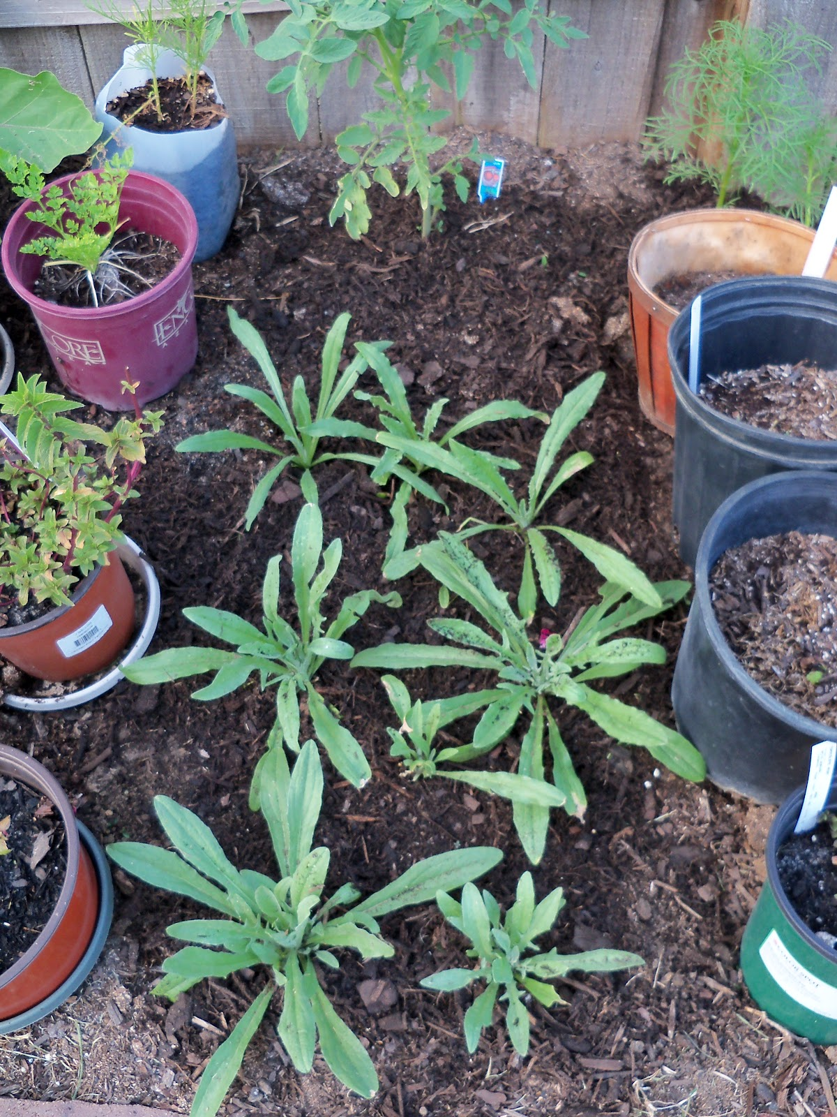 Gardening 2010, Part Two - 101_2018.JPG