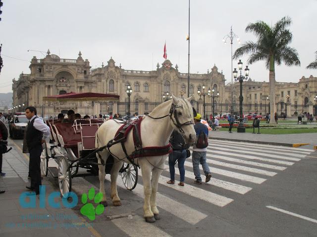 """El carruaje debe pesar unos 500 kgs. más las personas que se suben imaginamos que el animal terminará """"su trabajo"""" totalmente agotado. ¡No contribuyas a su explotación! No te subas a ningún carruaje que sea jalado por caballos u otros animales."""