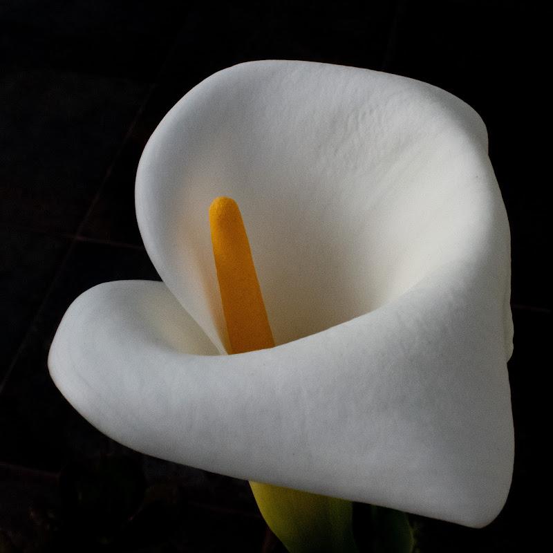 Bianco morbido di GianDC