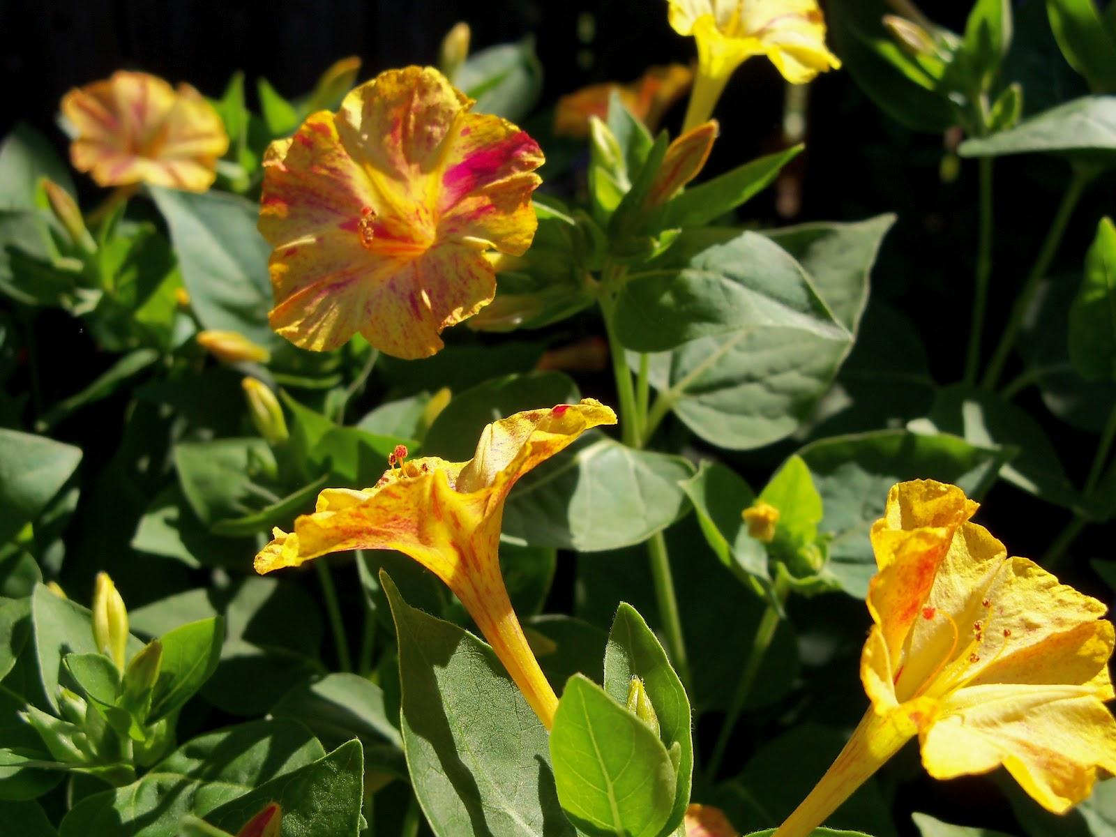 Gardening 2012 - 115_1528.JPG