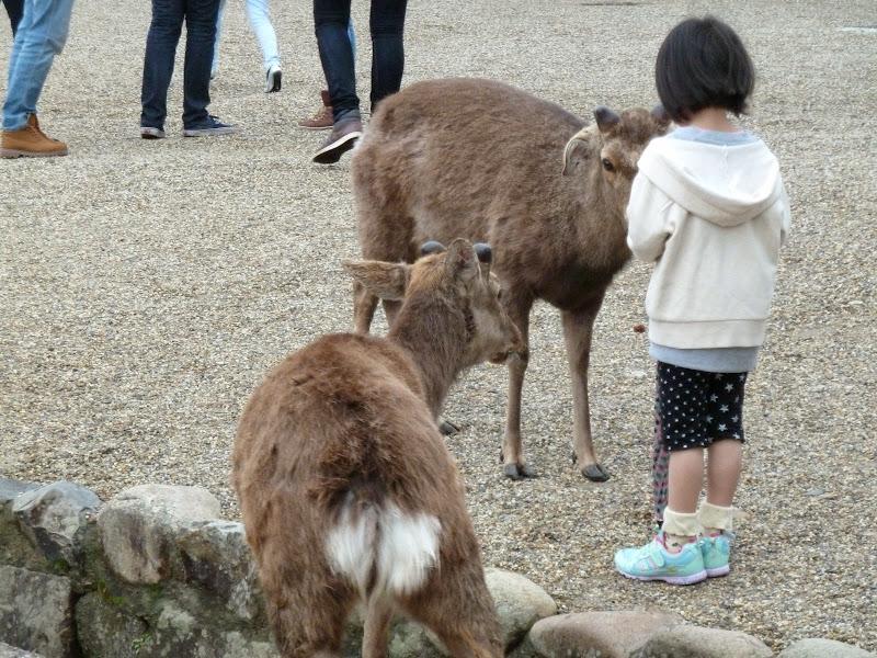 2014 Japan - Dag 8 - mike-P1050689-0224.JPG