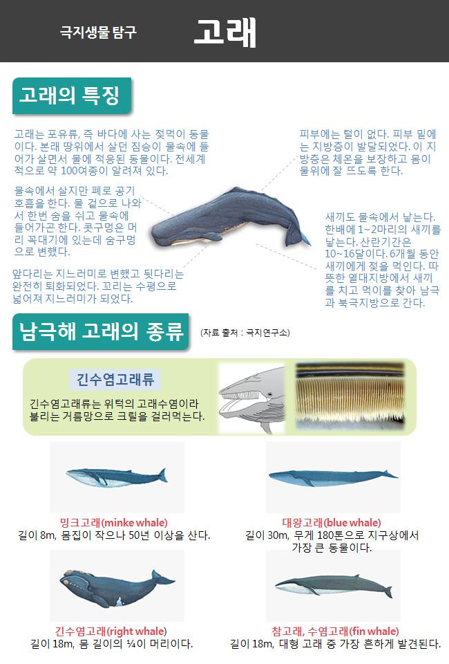 인포그래픽 고래1