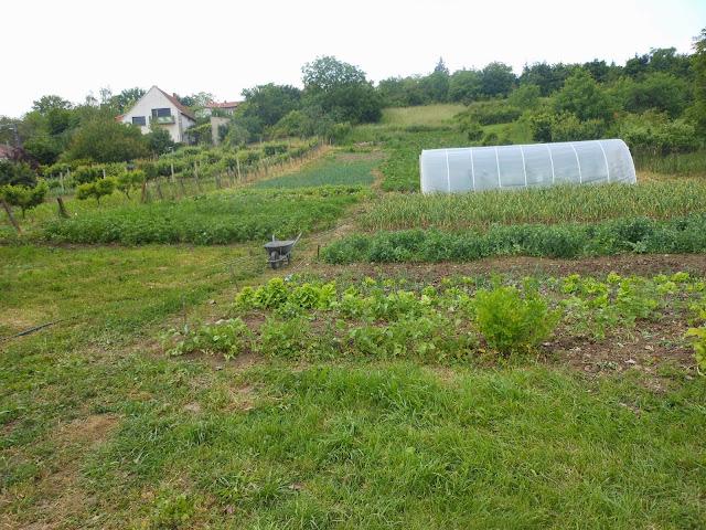 Kobeko közösségi kert - DSCN1006.JPG