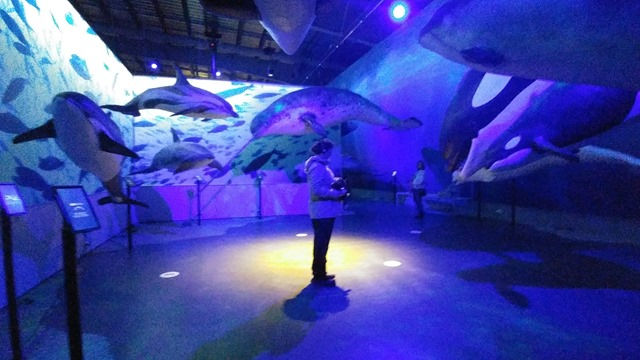 whale museum Iceland