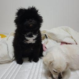 Yeosong Yun