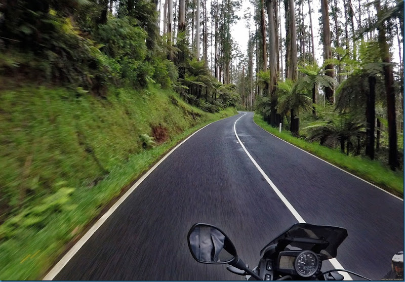 Australia's Best Motorcycle Roads – Yarra Ranges