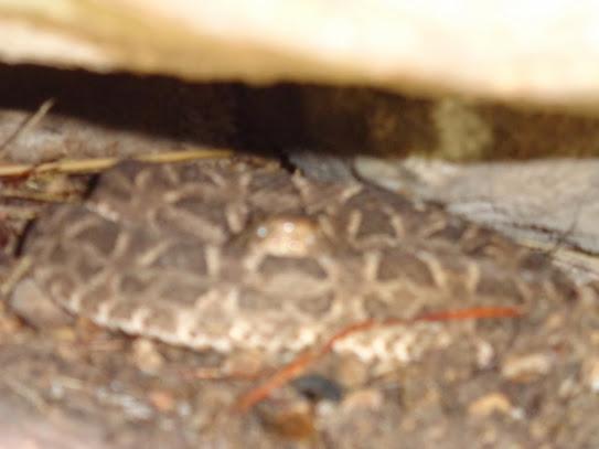 Reptil: Estás muy abajo en nuestra cadena alimenticia!!! DSC01408