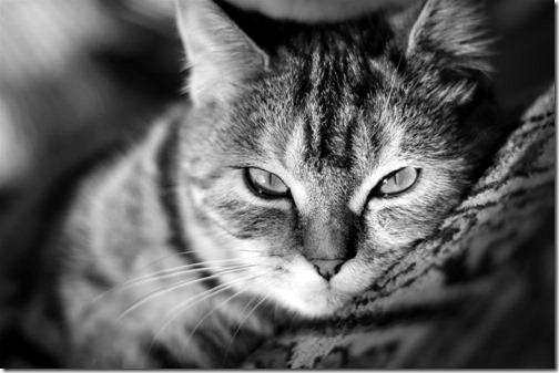 fotos de gatos (31)