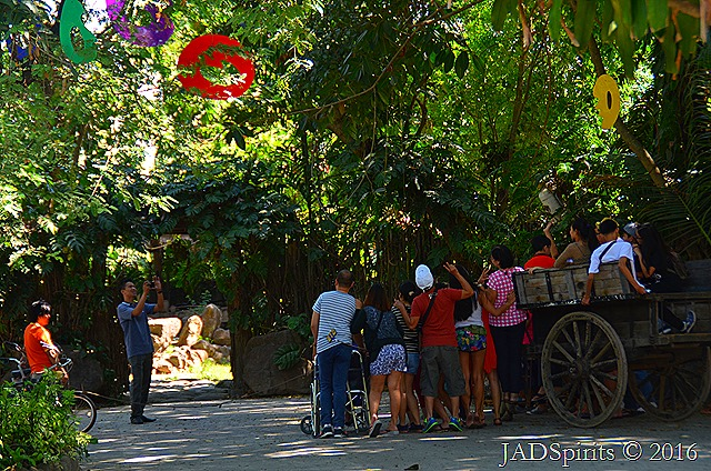 Carabao ride for groups to tour around Prado Farms