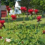 Melissa Jones Schoolyard Habitat Garden - Image%2B4.jpg