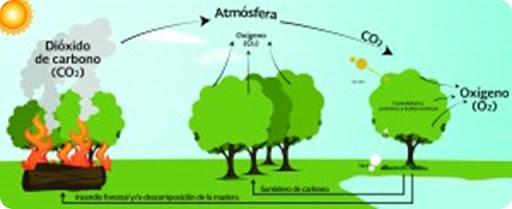dioxido-de-carbono-plantas