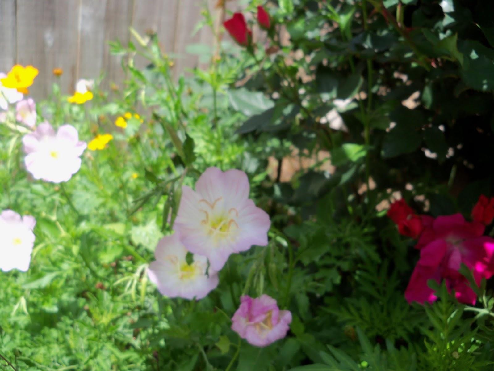 Gardening 2013 - 115_5713.JPG