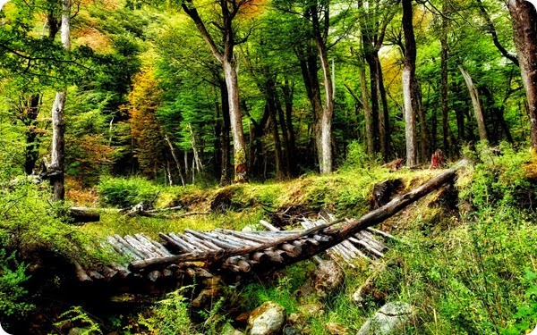 natura-les-derevya-mostik-priroda