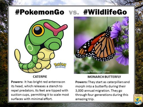 pokemongo-vs-wildlifego-3