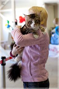 cats-show-25-03-2012-fife-spb-www.coonplanet.ru-024.jpg
