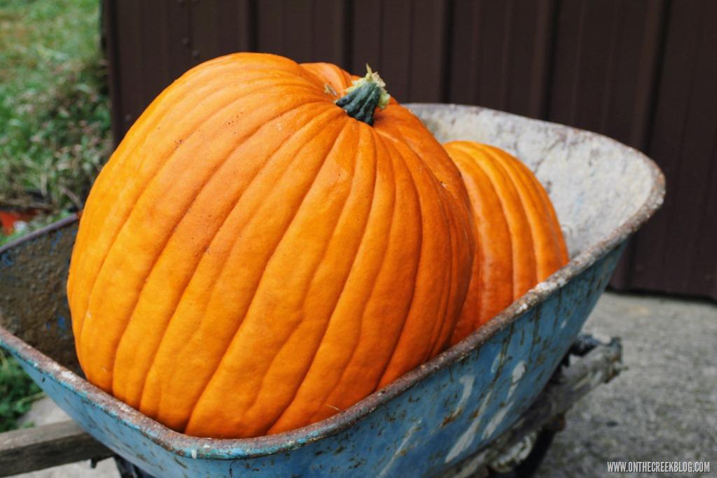 [pumpkin1%5B10%5D]
