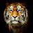 Viorel Stoica avatar image