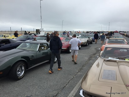 Rows and rows of Corvettes