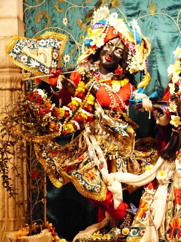 ISKCON New Govardhan Deity Darshan 12 Mar 2016 (22)