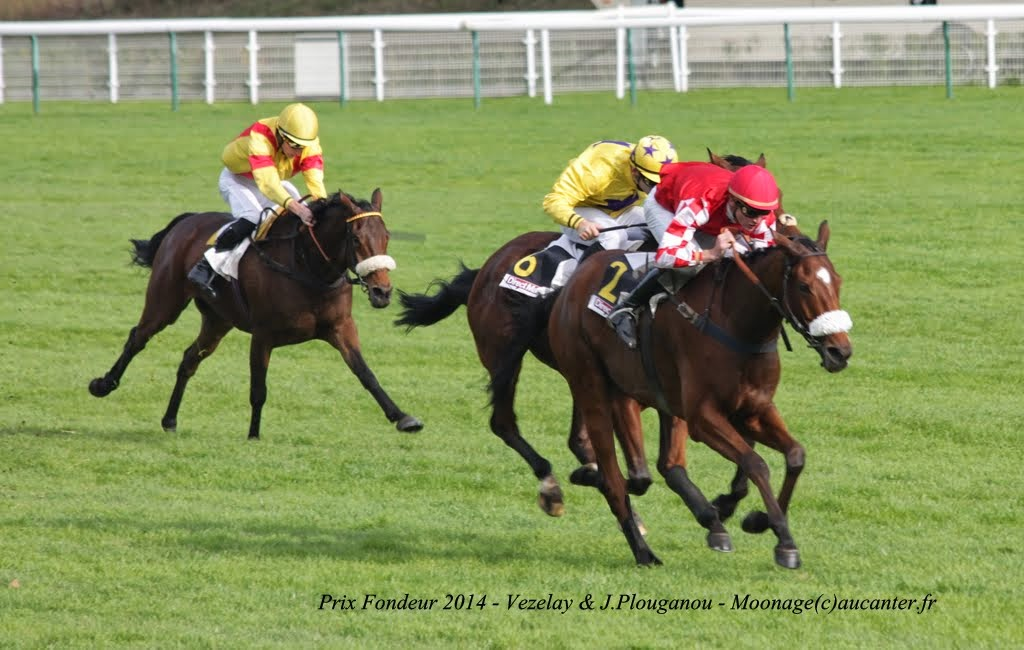 Photos Auteuil 2-11-2014 (48h de l'obstacle) IMG_5288