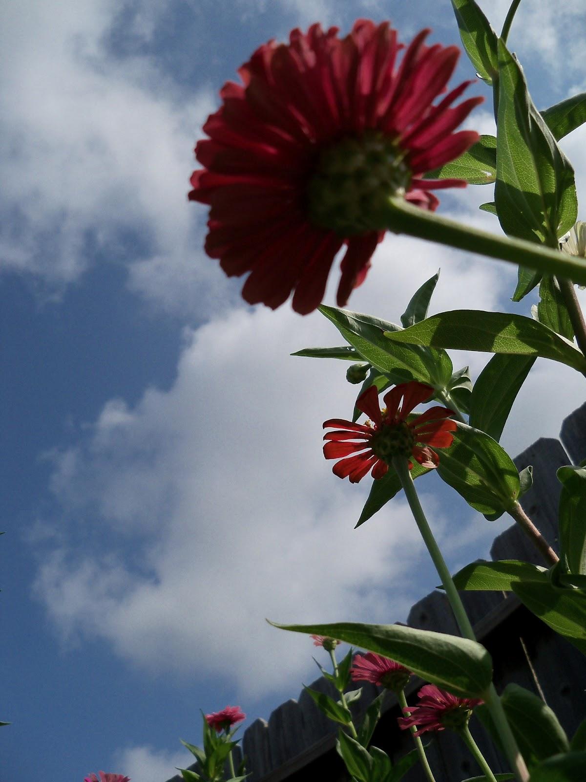 Gardening 2011 - 100_0094.JPG