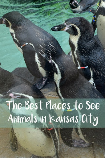 The Best Places to See Animals in Kansas City