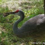 05-11-12 Wildlife Prairie State Park IL - IMGP1596.JPG