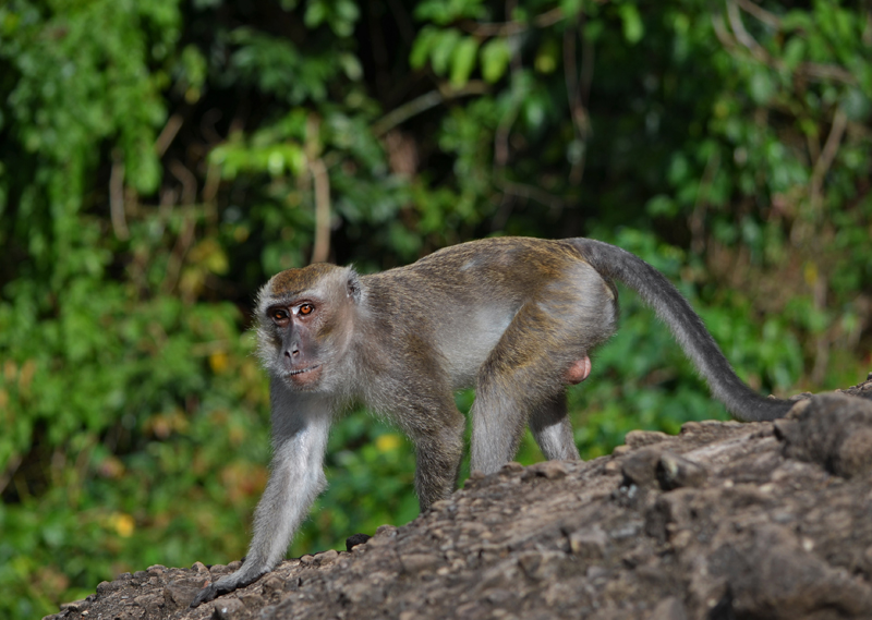 Image of Ebola Virus Discovered in the Philippines is Now Infecting Monkeys